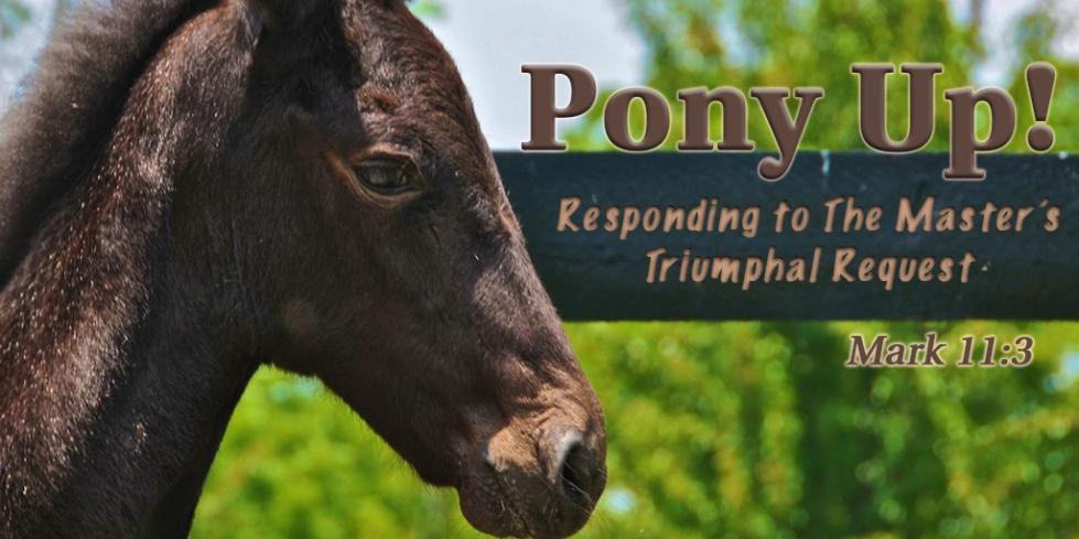01_PonyUp